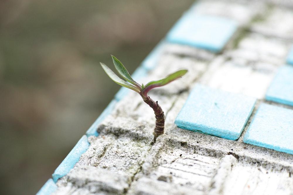 Focused on Growth